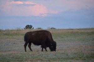 Castle Pines Community Daniels Gate Park Buffalo